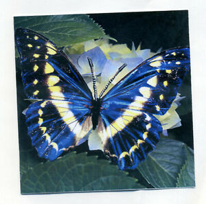 PK OF 8 BUTTERFLY NOTELETS WITH GREEN ENVELOPES FREE POST
