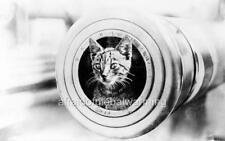 """Photo WW1 Australia """"Cat Looking Out from Muzzle of Gun"""""""