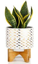 Greenaholics Medium Plant Pot - 5.5 Inch Cylinder White Ceramic Planter