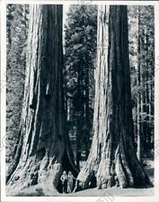 2 Girls Stand At Giant Sequoias At Mariposa Grove In Yosemite Press Photo