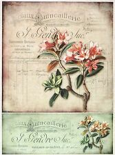 Carta di riso-Vintage Fiore-carta per Decoupage Decopatch Scrapbook Craft