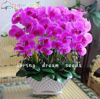 100 PCS Seeds Orchid Flowers Plants Garden Rare Phalaenopsis Orquidea Bonsai New