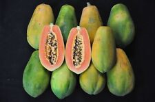 15 SEEDS Red Lady PAPAYA Seed, Very sweet flesh 100% Original From Thailand+