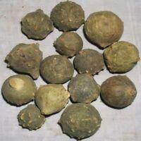 Gall Oak Aleppo oak Masikai Magic Nut Downy Oak Mayakku Mayaphala MANJUPHAL*****