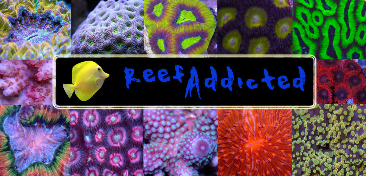 Reef Addicted