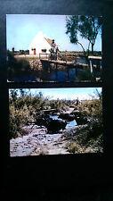 2 Camargue France Horses & Cattle Postcards various publ. c1960s