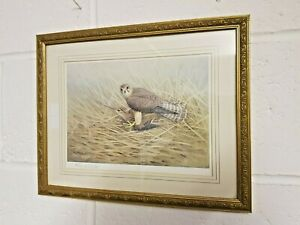 R. David Digby Signed Print Merlin on Sandpiper Collectable