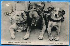 CPA: Bruxelles - Attelage de chiens de laitière