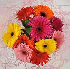 FRESH Birthday Flowers Delivered Gerbera Bouquet FREE UK Next Day by Post