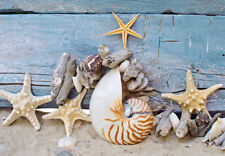 SEASHELLS BEACH STARFISH *  Large A3 SiZE QUALITY CANVAS  PRINT