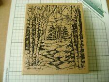 Northwoods forest woods scene river run edge snow tall trees cardinals/bluebirds