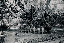 TAHITI c. 1940 - Vieux Banyan Ancien Lieu Sacré Ph. P.I. Nordmann - T29