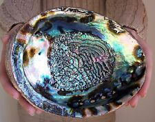 Stunning Large Rainbow Abalone Seashell, New, Free Shipping (Decor, Smudging)