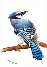 ACEO Limited Edition - Glistening blue, Blue jay art print, Collectible art