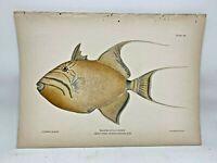 Original Antique Lithograph Fishes Puerto Rico Bien 1899 Plate 39