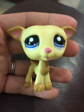 Littlest Pet Shop Yellow & Tan GREYHOUND #2041 Blue Eyes Dog Whippet pink nose