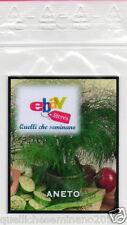 """500 SEMI DI ANETO """" Anethum graveolens""""  officinale aromatica -spezie- cucina"""