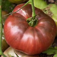 Heirloom Cherokee Purple Tomato 75+ Seeds Non-GMO USA + Gift & COMB S/H