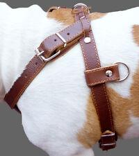 "Genuinel Leather Dog Pulling Padded Harness 30""-34"" chest Pitt Bull Doberman"