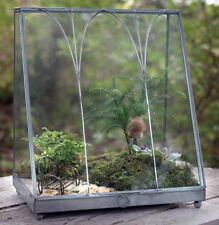 Table Top Glass Metal Wardian Display Case~Terrarium Greenhouse~Plants~Fairy BOX