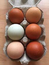 12 x Fertile Hatching Chicken Eggs - Mixed Breeds