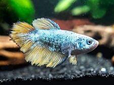 Live Aquarium Fish Ebay