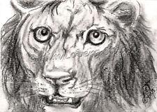 Lion African feline Cat aceo EBSQ Kim Loberg wildlife Mini Art Charcoal Animal