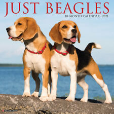 Just Beagles (dog breed calendar) 2021 Wall Calendar (Free Shipping)