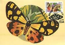 Arctia villica  butterfly Postcard