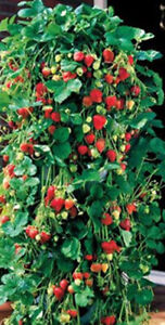 Hanging Strawberry Growbag Planter Pouch Trailing Plants (6 Pack)
