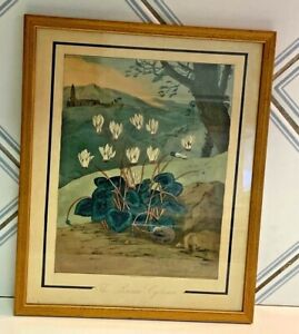 Antique Art Deco hand Colored~Engraving~The Persian Cyclamen~William Elmes