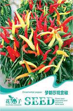 1 Pack 20 Ornamental Colorful Pepper Seeds Capsicum Organic B077