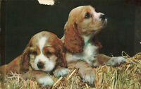 Postcard Puppies