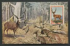 RUSSIA MK 1957 FAUNA HIRSCH WILD DEER MAXIMUMKARTE CARTE MAXIMUM CARD MC d7745