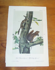 Audubon. Quadrupeds. Octavo. Fremont's Squirrel. ca. 1855.