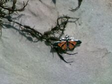 Monarch Butterfly Pendant Inlayed w/Spiny Oyster Shell in Sterling Silver