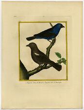 Antique Print-BRASILIAN BLUE-AMERICAN BLACK-TANAGER-TANGARA-Martinet-Buffon-1770