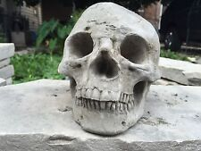Human Skull Halloween GRAY CEMENT STATUE CONCRETE Lawn Ornament Decoration Prop