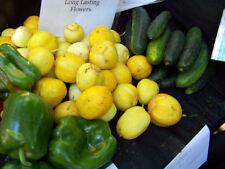 cucumber, LEMON, heirloom, 12 seeds! GroCo