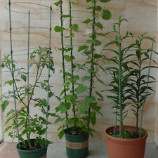 NQP GARDEN TRADING Barrington Domed Plant Support Raw Metal Large