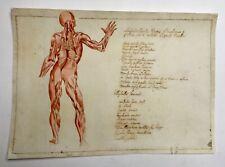 Dessin d'anatomie ancien légendé en latin, Aquarelle XIXe