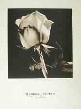Thomas horbett ROSE poster stampa d'arte immagine 61x45,5cm