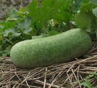 i! WACHS-KÜRBIS !i für den Garten grosse Früchte viele Vitamine winterhart Exot