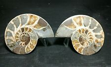 Pair Split FossilAmmonite cut & Polished slices.  Madagascar 199 grams