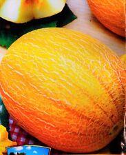 Melon DIDONA Seeds yellow melon organic non-GMO seeds Ukraine 3 g Farmer's idea