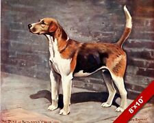LOYAL ENGLISH FOX HOUND PET HUNTING DOG ART PAINTING PRINT ON REAL CANVAS