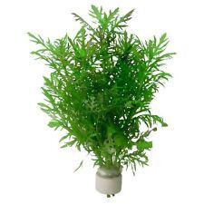 6 x 5 cm Pots of Hygrophila difformis (Water Wisteria)