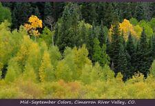 "Mid-September Colors; Cimarron River Valley, CO. APS-C Digital Photo, 15""x24""."