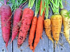 400+RAINBOW CARROTS 5 Colors All Natural Organic Non-Gmo Seeds Gourmet Kitchen