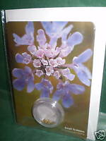 WILDFLOWER GREETING CARDS &  SEEDS,SMALL SCABIOUS